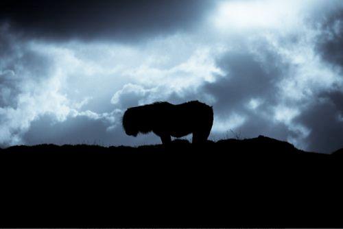 Shetland moods