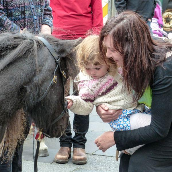 Shetland ponies in sweaters go to Lerwick | My Shetland