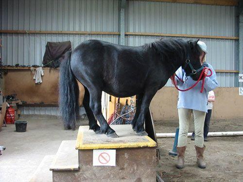 andy-circus-pony-2