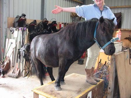 andy-circus-pony-4