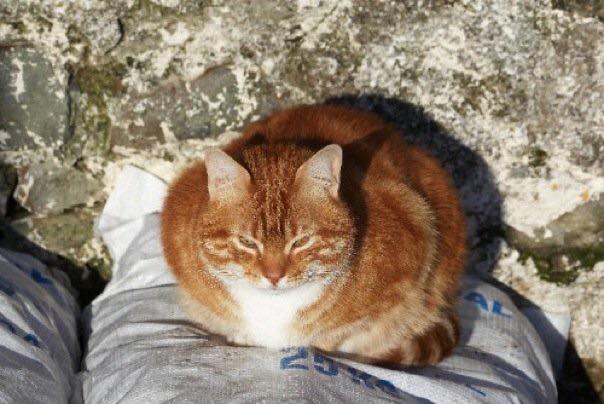 Cats Protection Lerwick